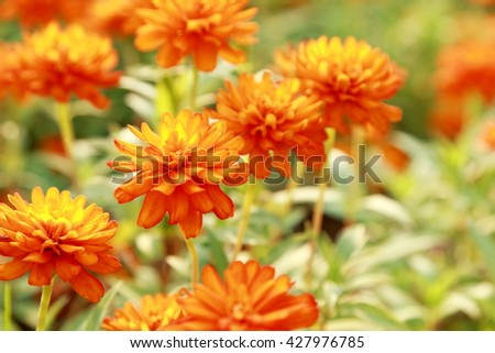 Orange flowers in the park.