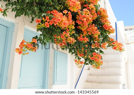 Orange flowers over a classic white house in Mykonos, Greece on a sunny day