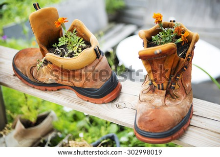 orange flowers planted in two old boots - stock photo
