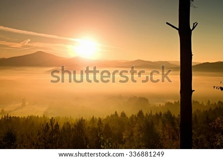 Orange foggy morning. Dried lonely tree on a mountain slope at misty day - stock photo
