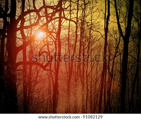 orange  forest in the sunrise - stock photo