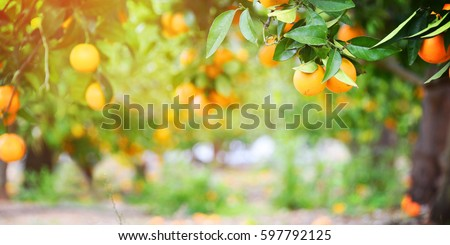 Pleasing Fruit Tree Garden Stock Images Royaltyfree Images  Vectors  With Glamorous Orange Garden With Beautiful Gardeners In Northampton Also Gardening Jobs In Somerset In Addition Garden Clog And Hilton Gardens As Well As Bq Gardening Gloves Additionally Gardening Tool Kit From Shutterstockcom With   Glamorous Fruit Tree Garden Stock Images Royaltyfree Images  Vectors  With Beautiful Orange Garden And Pleasing Gardeners In Northampton Also Gardening Jobs In Somerset In Addition Garden Clog From Shutterstockcom