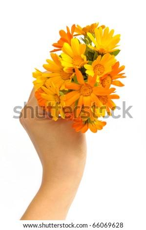 orange gerber flowers - stock photo