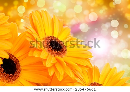 Orange gerber flowers on color background - stock photo
