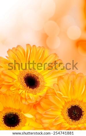 Orange gerber flowers on color background - stock photo