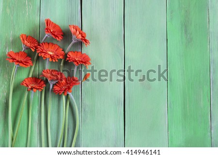 Orange gerbera daisies on a green plank background,  free text place, holiday concept - stock photo