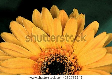 Orange gerbera daisy flower, watercolor. - stock photo