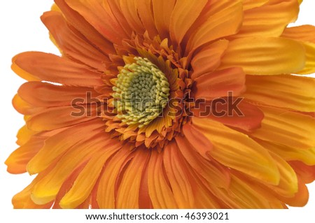 Orange Gerbera Daisy  isolated on white with a clipping path and copy space.  File includes Clipping Path.