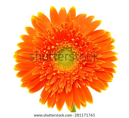 Orange gerbera flower isolated on a white background - stock photo