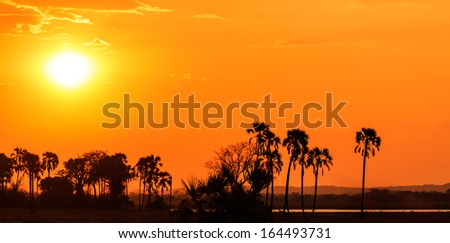 Orange glow sunset in a palm trees landscape in Africa - stock photo