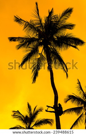 Orange glow sunset with a palm tree silhouette in front - stock photo
