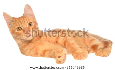 Orange kitten lay on a side view on a white background - stock photo