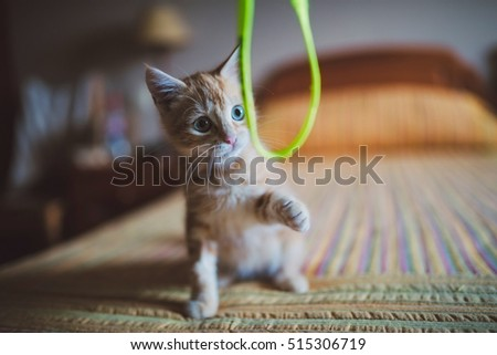 Orange kitten playing with a rope at home