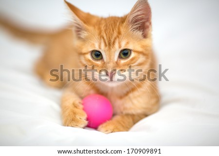 Orange kitten with a ball on a white background - stock photo