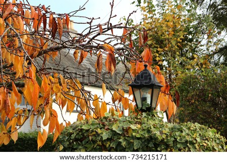Orange leaves of Autumn