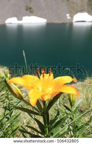Orange lili in front of one of the Vens lakes, Mercantour National Park, France - stock photo