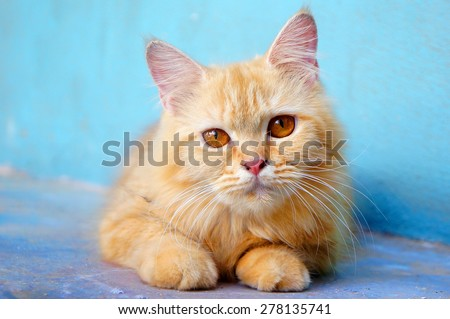 Orange little cat on the isolated background - stock photo