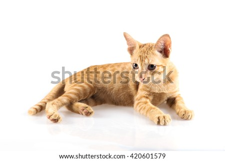 Orange little cat on the isolated background.