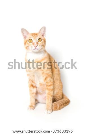 Orange little Cat on white background - stock photo
