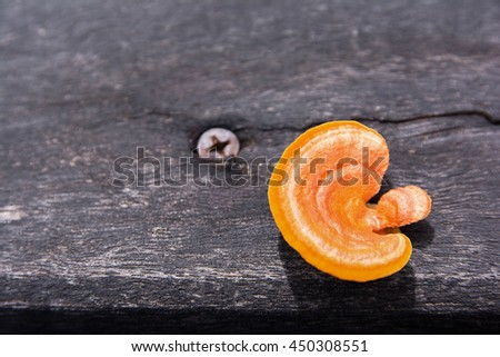 Orange mushroom growing on old plank beside rusty bolt - stock photo