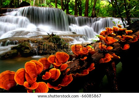 Orange mushroom with waterfalls - stock photo