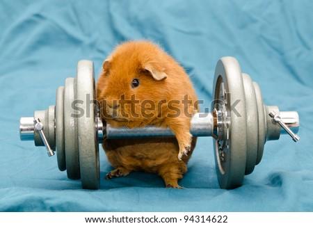 orange pig - stock photo