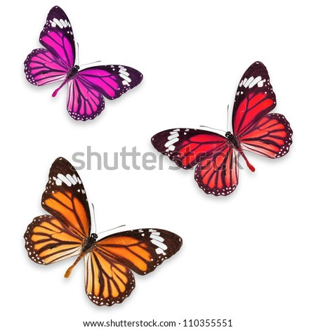 Orange pink and Red butterflies isolated on white with soft shadow beneath each - stock photo