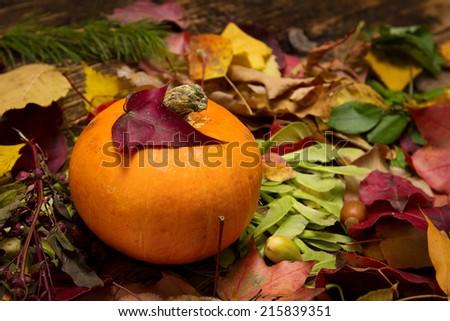 Orange pumpkin in autumn leaves - stock photo