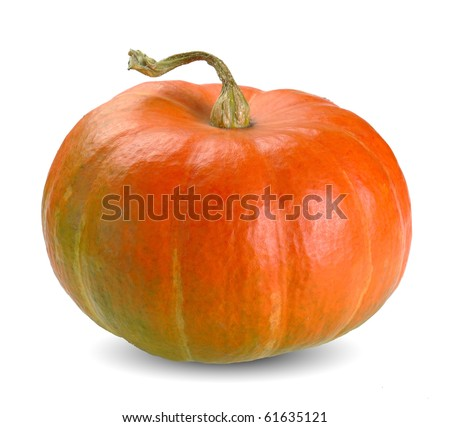 Orange pumpkin vector illustration