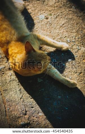 orange red tabby cat male kitten curled up sleeping  - stock photo