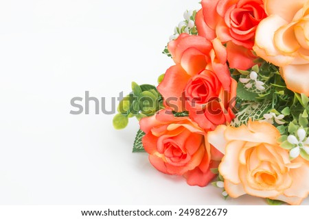 Orange rose flowers on white background