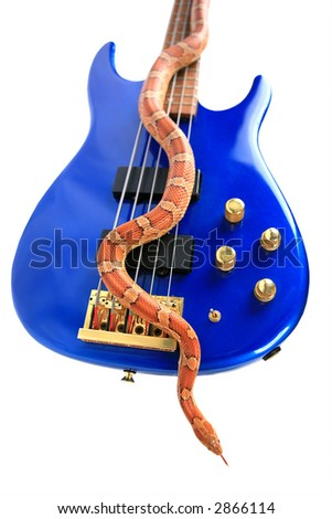 Orange snake crawling on blue electric guitar isolated with clipping path - stock photo
