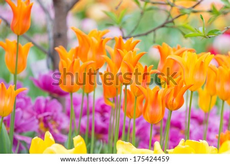 Orange Spring Flowers - stock photo