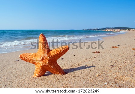 Orange starfish on the sandy beach with sea waves in the background - stock photo