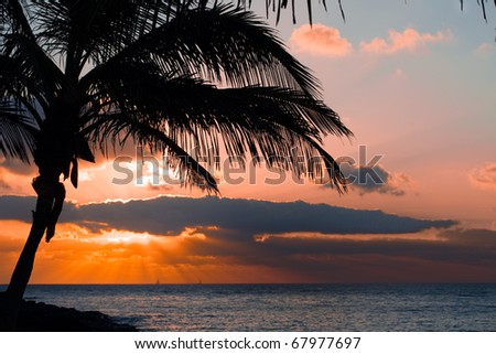 orange sunset on tropical island with palm - stock photo
