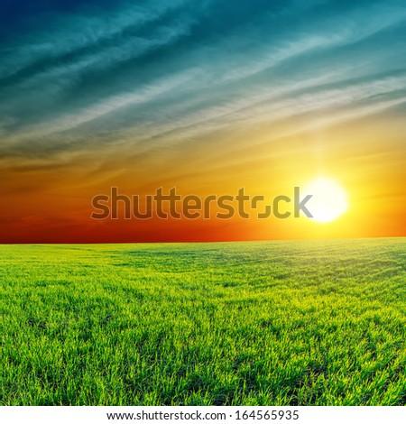 orange sunset over green field - stock photo