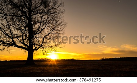 orange sunset throw a tree branches