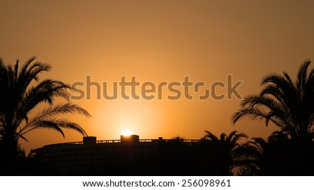 Orange Sunset With Palm Trees. Travel Destination. Summer Resort. Palm Trees Silhouetted In Bright Orange Sky Sunset. - stock photo