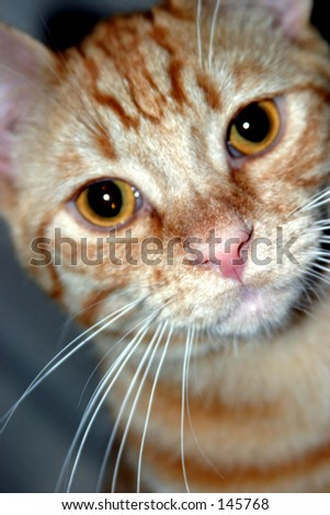 Orange tabby cat.
