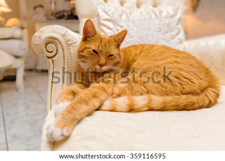 Orange tabby cat having a relaxing rest on some luxurious furniture acting like royalty. - stock photo