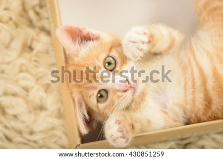 Orange tabby cat in a present box - stock photo