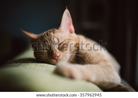Orange tabby cat sleeping on a couch at home in a winter afternoon