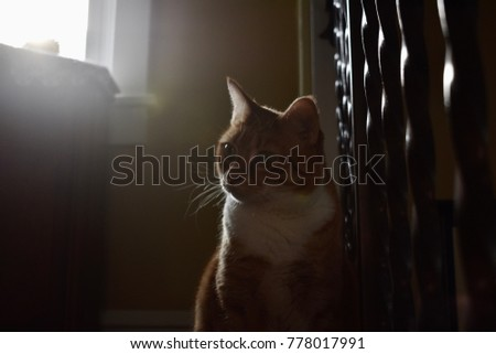 Orange Tabby in the Sun