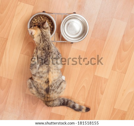 Orange tabby kitten eats from a bowl indoors, top view - stock photo