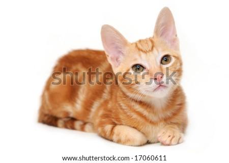 cat can't urinate