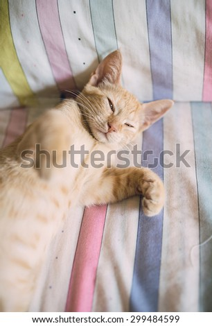 Orange tabby kitten resting on a bed at home - stock photo