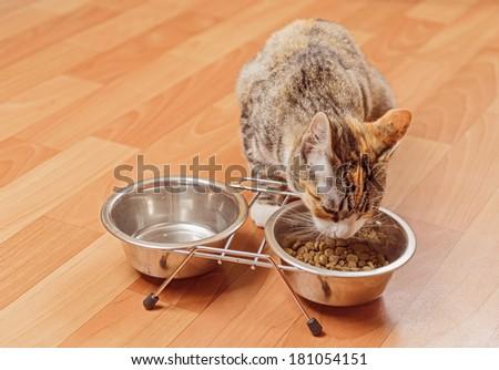 Orange tabby small cat eats from a bowl - stock photo