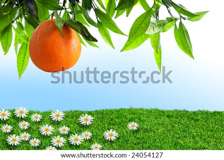 Orange-tree branch with one orange over grass field with flowers - stock photo