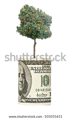 orange tree  growing from euro bill - stock photo