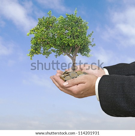 Orange tree in hands - stock photo